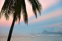 Palm tree sailboat, sunrise and the Island of Moorea. Tahiti. French Polynesia