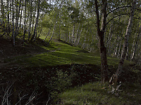 FOREST_LOCATION_90057