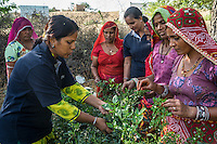 Sunayana Ingle, an associate at Technoserve, provides field training to a group of women who are a part of Technoserve's kitchen garden program, in a kitchen garden in Bamanwali village, Bikaner, Rajasthan, India on October 24th, 2016. Non-profit organisation Technoserve works with guar farmer's wives in Bikaner, providing technical support and training for edible gardening, to improve the nutritional quality of their food and relieve financial stress on farming communities. Photograph by Suzanne Lee for Technoserve