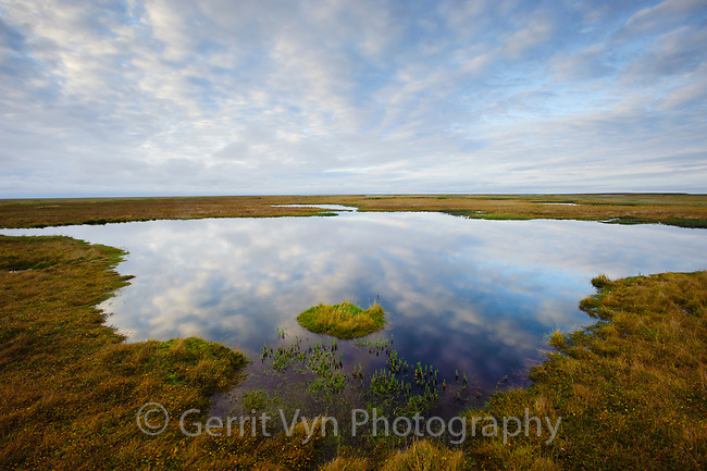 Coastal tundra pond. Yukon Delta National Wildlife Refuge, Alaska. September.
