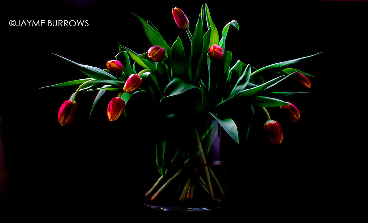 A vase of tulips against a black backdrop.