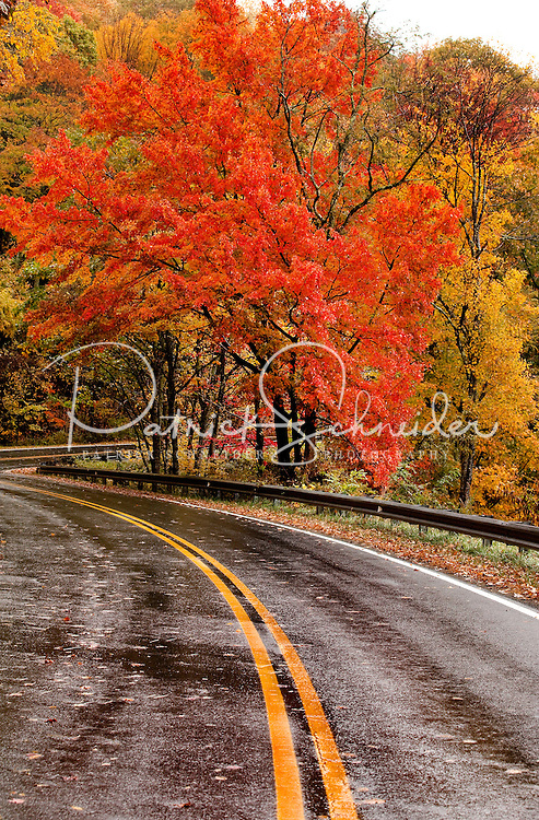 Trees transform a road with their brilliant autumn colors. Photo taken in  Seven Devils, North Carolina.