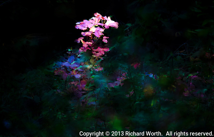 A ray of sunlight found its way through the high canopy, illuminating a patch of red surrounded by shaded green.