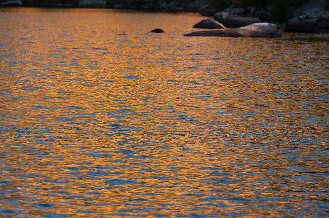fall, color, reflection, gold, blue, ripples, nature, September, morning, Bear Lake, Rocky Mountain National Park, Colorado, Rocky Mountains, USA