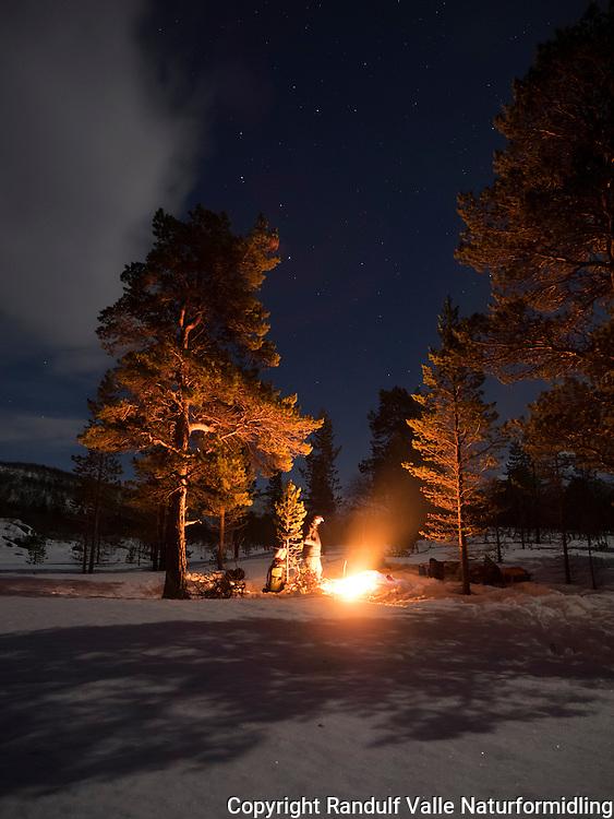 Leir under åpen himmel i nærheten av Skoganvarre. ---- Camp under pine trees.