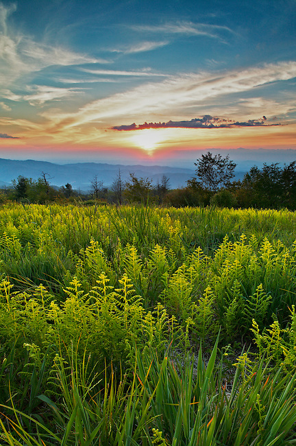 Spring ferns at sunset along Beauty Spot, Unaka Mountains, Tennessee and North Carolina