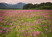 Shooting Star Meadow, Juneau