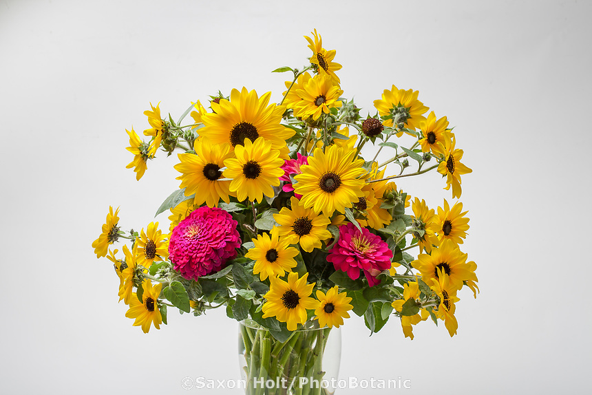 Sunfinity™ sunflower bouquet on white background- Syngenta Flowers