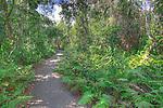 Gumbo Limbo Trail, Everglades National Park, Florida