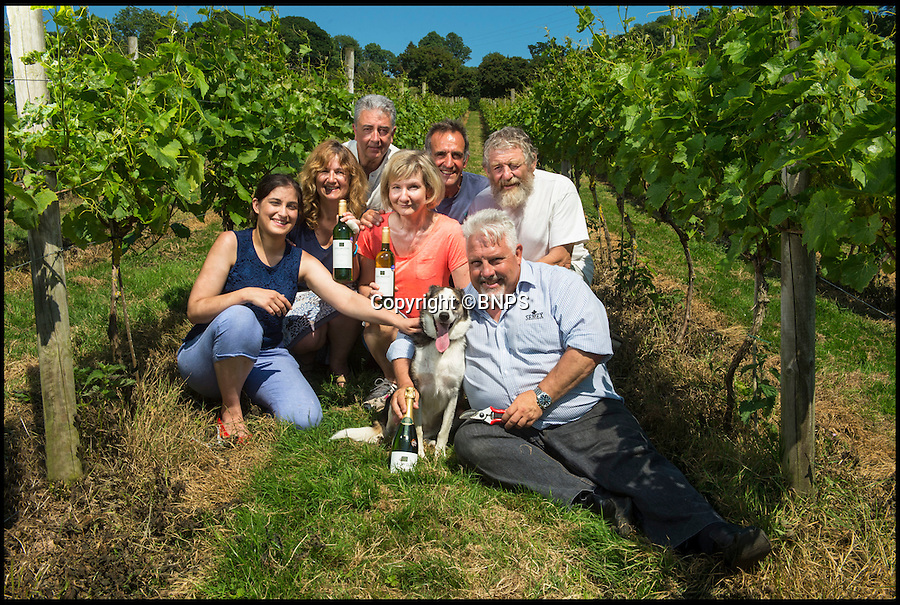 Bmth News (01202 558833)<br /> Pic: PhilYeomans/BNPS<br /> <br /> The whole village helps to tend the vines...<br /> <br /> A village pub skittle team who formed a wine-growing syndicate have bowled industry experts over with their award-winning version of Champagne.<br /> <br /> But wine lovers may struggle to lay their hands on a bottle of the tasty first vintage, as the two acre site barely produces enough vino to keep the thirsty locals happy...and you certainly won't find it in a main stream supermarket.<br /> <br /> The idea to plant their own grapevines came to the four drinkers in 2007 as a result of a conversation in their local pub in Shaldon, Devon.<br /> <br /> In 2013 the group, called Dalwood Vineyard, took their first harvest and in 2015 they celebrated its first bottle of sparkling wine which has now won a bronze medal in the prestigious Decanter World Wine Awards.