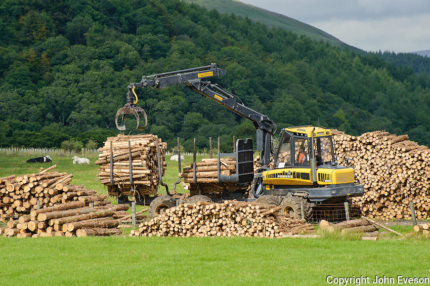 Loading timber logs on to a trailer. Whitewell, Lancashire.