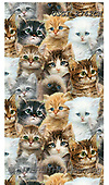 GIORDANO, CUTE ANIMALS, LUSTIGE TIERE, ANIMALITOS DIVERTIDOS, paintings+++++,USGI2762CN,#ac#, EVERYDAY,cats