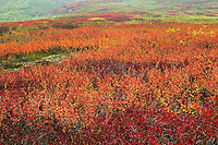 Autumn colors in Atigun Pass and the Brooks Range from the Dalton Highway, Alaska