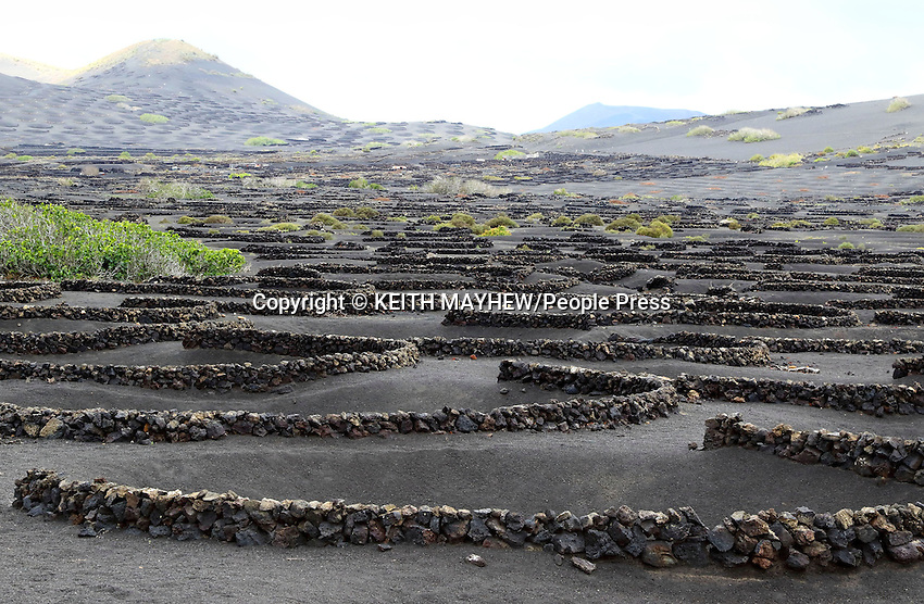 LANZAROTE, CANARY ISLANDS - Small black lava stone called Picon is used to make crescent stone walls to produce a protected area for the vines and allow the island to me wine growing country, nr Yaiza , during January 2016 in Lanzarote, Canary Islands<br /> <br /> Photo by Keith Mayhew