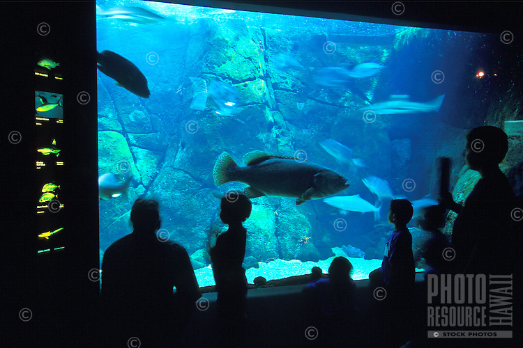 A large grouper enjoys attention from children and adults as it hovers at the front of the Waikiki Aquarium's shark exhibit, Kapiolani Park, Honolulu