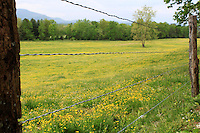 Stock photo of barbed wire fence in cades cove, beautiful field of wild grass and buttercup flowers seen on the other side.