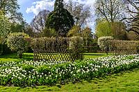 France, Loir-et-Cher (41), Cheverny, château et jardin de Cheverny en avril, le jardin des apprentis, tulipes 'French Class'