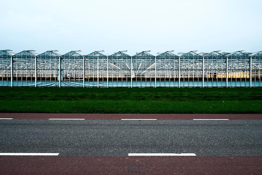 Nederland, Berkel en Rodenrijs, 6 sept 2014<br /> Kassen van rozenkweker. Kunstlicht in de kas laat rozen harder groeien.<br /> Foto: (c) Michiel Wijnbergh