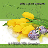 Isabella, EASTER, OSTERN, PASCUA, photos+++++,ITKE161422-BSTRWSK,#e# easter tulips