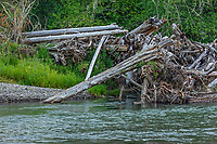 Nisqually River, WA.  July.  Photo shows results--large log jam--of periodic floods.