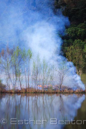 Wetlands, a billabong of Hawkesbury River, along Tizzana Rd, grasses being burnt off by local farmer. Richmond area, Sydney, NSW
