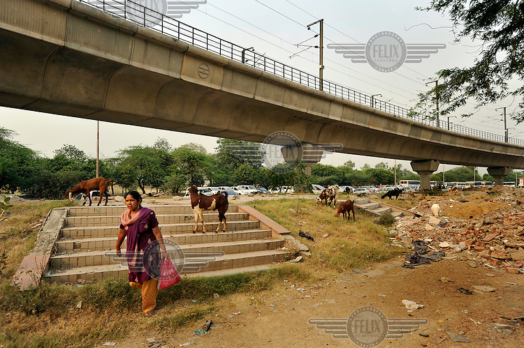 A woman carries a bag of shopping past wandering goats foraging for food beneath the raised Metro line near where it approaches Nehru Place Station.