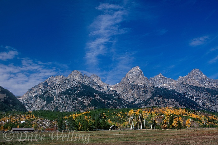 749450431 ranch buildings and fall colored aspens populus tremuloides below the teton range on an autumn day in grand tetons national park wyoming