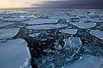 Pancake Ice and floes - on Arctic Sea Ice, Fram Strait, between Greenland and Svalbard, September 2009. In August 2012, Arctic sea ice hit a record minimum - this will affect weather and the global climate, as the ice cap reflects much of the sun's solar energy back into to space. With sea ice melting away, the dark water below absorbs more solar energy, which in turn causes more melting.