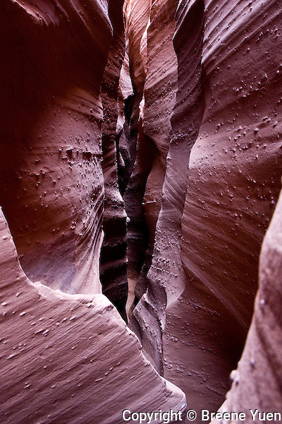 Narrow knobby Navajo Sandstone canyon walls in Spooky Slot Canyon, near Escalante, Utah, October 2007