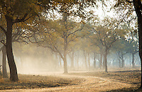 Unpaved road, Luangwa River Valley. Zambia, Africa
