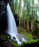 USA, Oregon, A waterfall in an Old Growth Forest