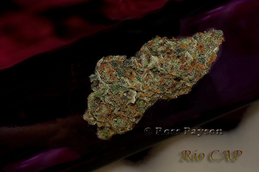 Rio Cap nug photo, shot in a professional photography studio.