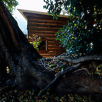A glimpse of Le Corbusier's log cabin beyond the gnarled roots of an old tree