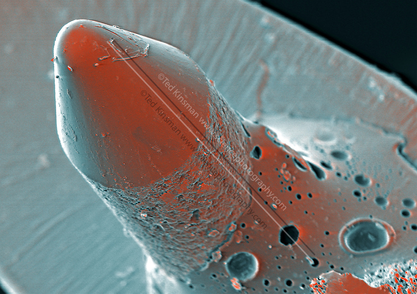 Needle playing a record. Colored scanning electron micrograph (SEM) of the needle (stylus) of a record player.  This needle is designed to play stero recordings.   This needle is designed for mon recordings at 78 RPM. The magnification is 105x when printed 10 cm wide