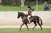 Hunter Pony over 13.2 NE 14hh