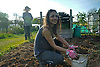 Preparing the allotment plot for planting.<br />