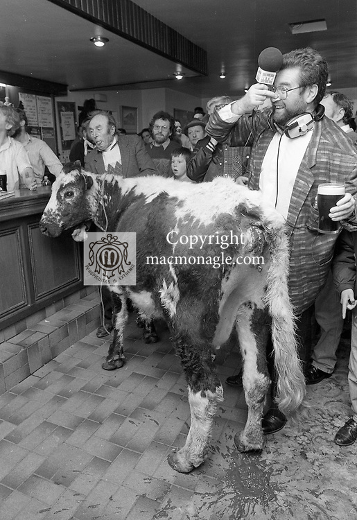 1992 The Blackwater Taverm (owner Teddy O'Neill) Direendraugh, Blackwater, Sneem, County Kerry Ireland 1992:  The Gay Byrne Radio Show, (Ireland's most listened to show) celebrated 'Big Bertha', reaching 48 years of age and appearing in the Guinness Book of Records as the world's oldest cow. In this photograph Joe Duffy who worked on the show in pub pub as it broadcast live on air in 1992. Bertha left her 'mark' on the floor during the transmission.<br /> Big Bertha died on New Year's Eve 1993.<br /> Photo: Don MacMonagle <br /> e: info@macmonagle.com
