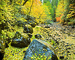Autumn colors along nearly dry Tenaya Creek. Yosemite National Park (est. 1906), 761,268 acres (3,080.74 km2), 1,189 sq mi (3,080 km2). Park elevations range from 2,127 to 13,114 feet (648 to 3,997 m) and contains five major vegetation zones: chaparral/oak woodland, lower montane, upper montane, subalpine, and alpine. Yosemite Valley carved by glacial movement about 1 million years ago. World Heritage Site (1984). Mariposa County, CA.