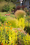 Looking through a mixed bed of ornamental grasses, shrubs, and flowering perennials including orange California Poppies, at a red wagon sitting in front of the bungalow-style farmhouse just beyond on Vashon Island in Washington State's Puget Sound.
