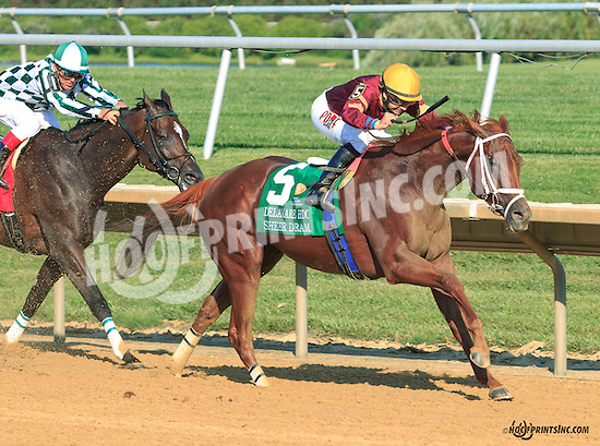 Sheer Drama winning The Delaware Handicap (gr 1) at Delaware Park on 7/18/15