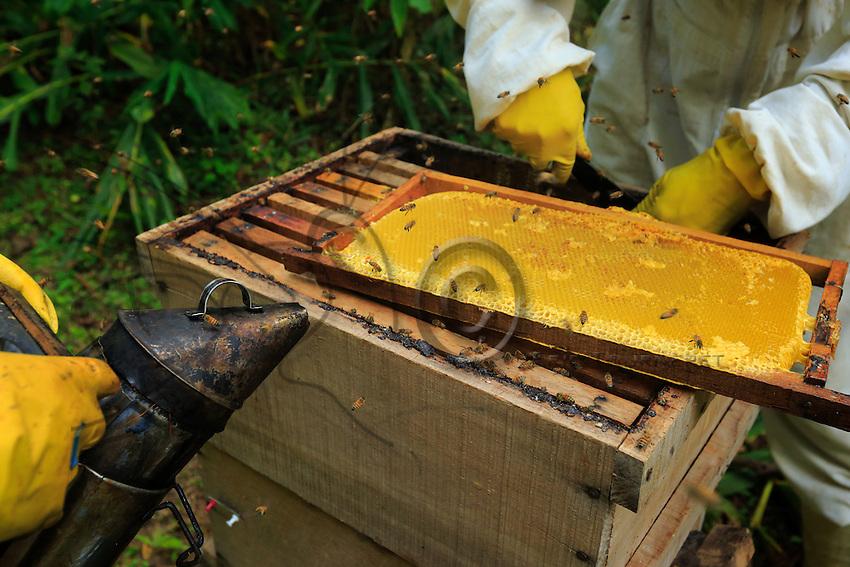 A frame of honey.///Un cadre de miel.