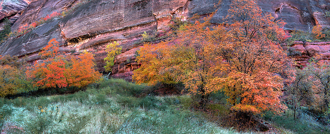 Fall colors have arrived at Zion Narional Park, Utah