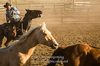 Got him Cowboys working and playing. Cowboy Cowboy Photo Cowboy, Cowboy and Cowgirl photographs of western ranches working with horses and cattle by western cowboy photographer Jess Lee. Photographing ranches big and small in Wyoming,Montana,Idaho,Oregon,Colorado,Nevada,Arizona,Utah,New Mexico.
