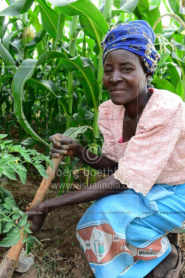 Malawi, Thyolo, NGO CARD Churches Action in Relief and Development, Bewaesserungssystem im Dorf Samuti, Frau Esnart Miles, 55, sie ist HIV positiv, hackt in ihrem bewaesserten Mais und Tomatenfeld