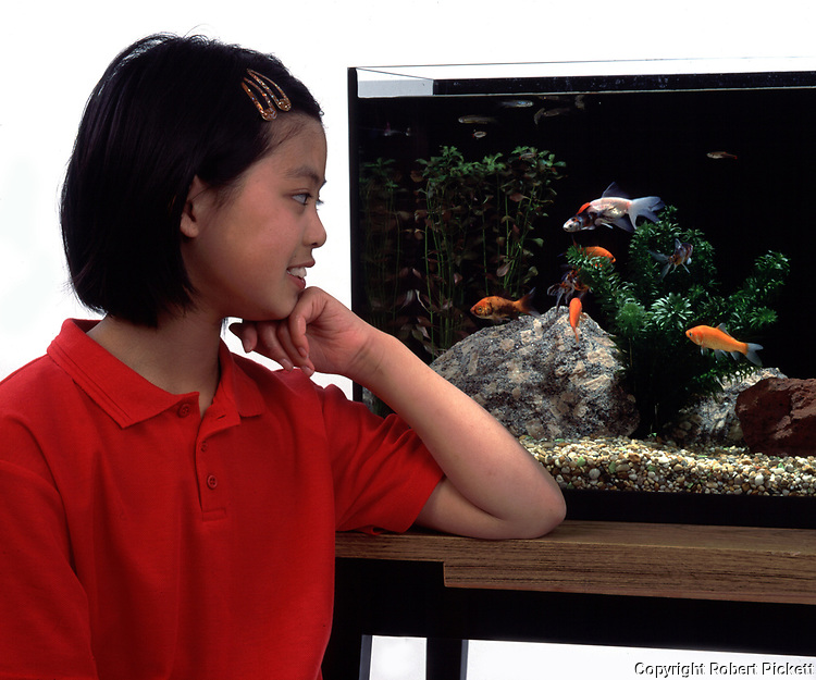Young Girl, aged 12 years old, looking at goldfish in cold water fish tank, in studio, cut out, white background