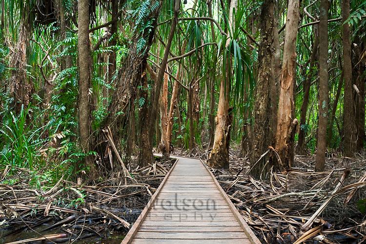 Melaleuca wetlands boardwalk at Centenary Lakes.  Cairns, Queensland, Australia