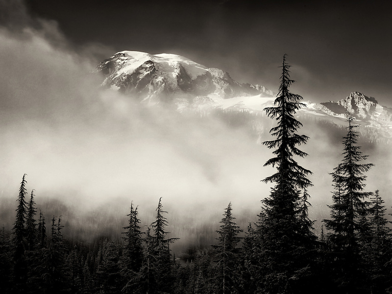 Fog trees and Mt. Rainier. Mt. Rainier National Park, Washington