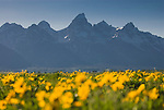 Grand Teton Photos, Grand Teton National Park
