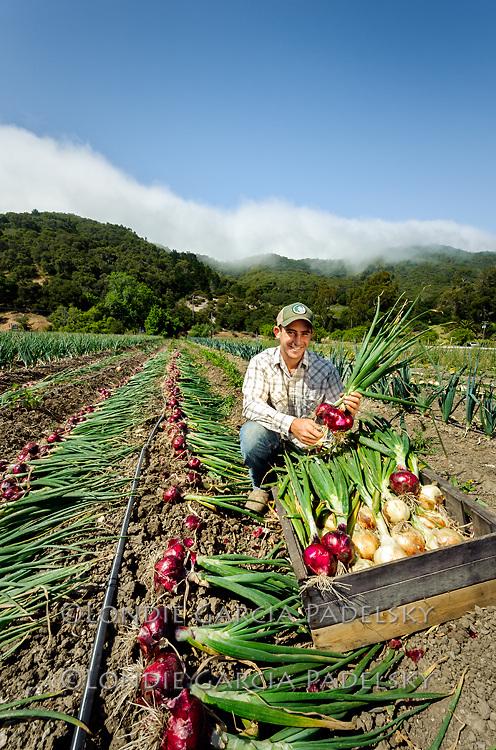 Jake picking onions at Avila Valley Barn, farm stand and petting zoo in Avila Valley, San Luis Obispo County, California