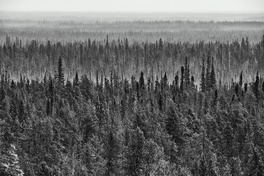 Mist rolls around the trees in the Northwest Territories.